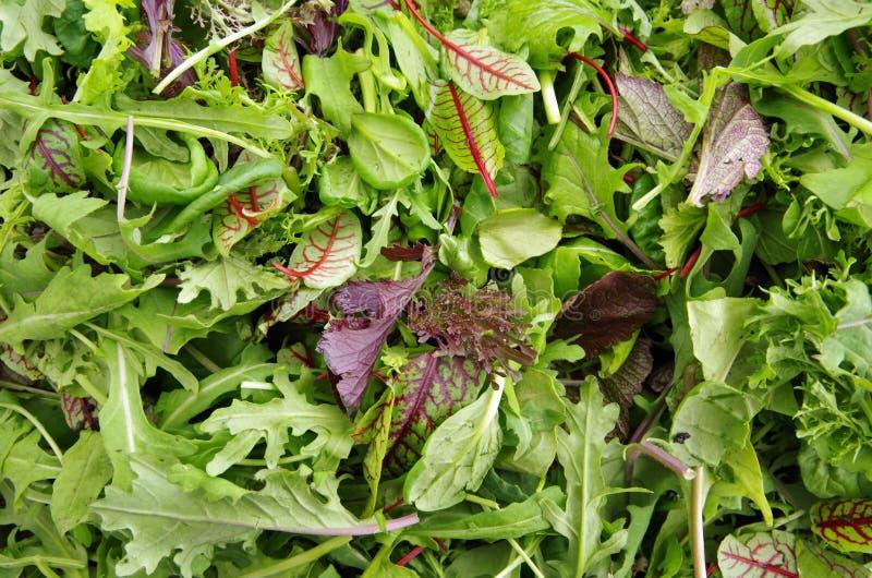 Verdes frescos do campo da salada misturada fotografia de stock