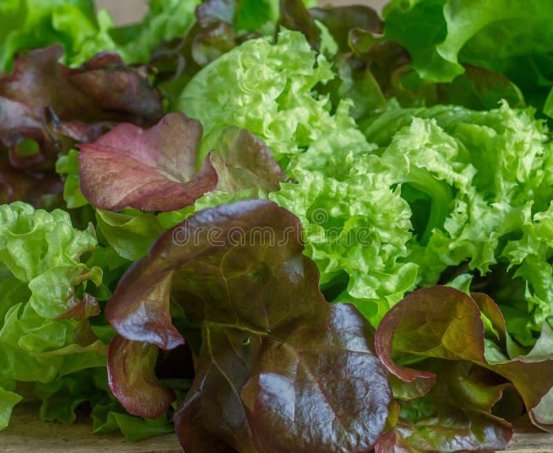 Verdes frescos do campo da salada misturada empilhados perto acima da vista imagem de stock royalty free