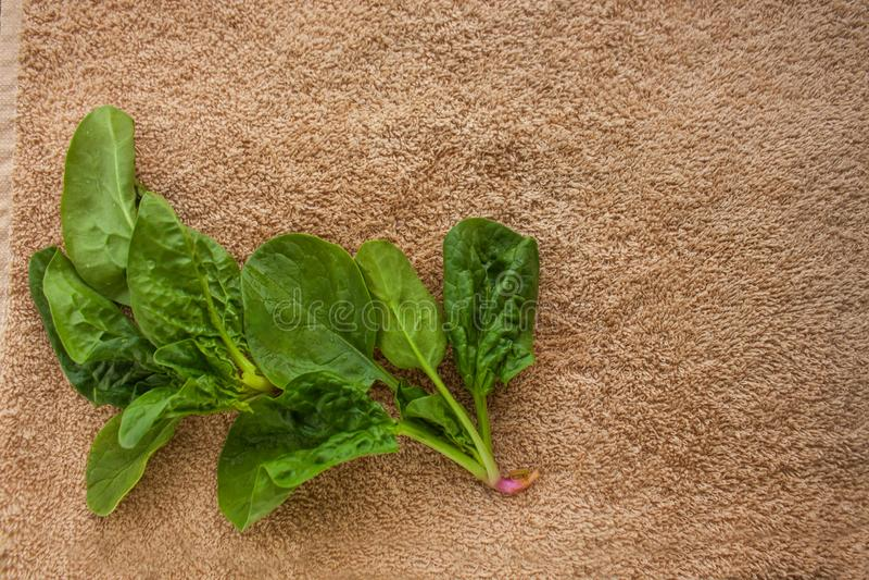Verdes frescos lavados na toalha de cozinha, estilo de vida saud?vel dos espinafres, eco amig?vel, cru, vegetariano, espa?o da c? imagens de stock