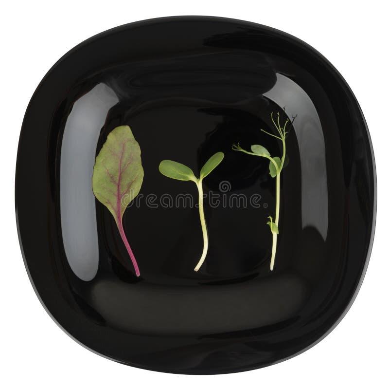 Verdes micro de Minimalistic fotografía de archivo libre de regalías