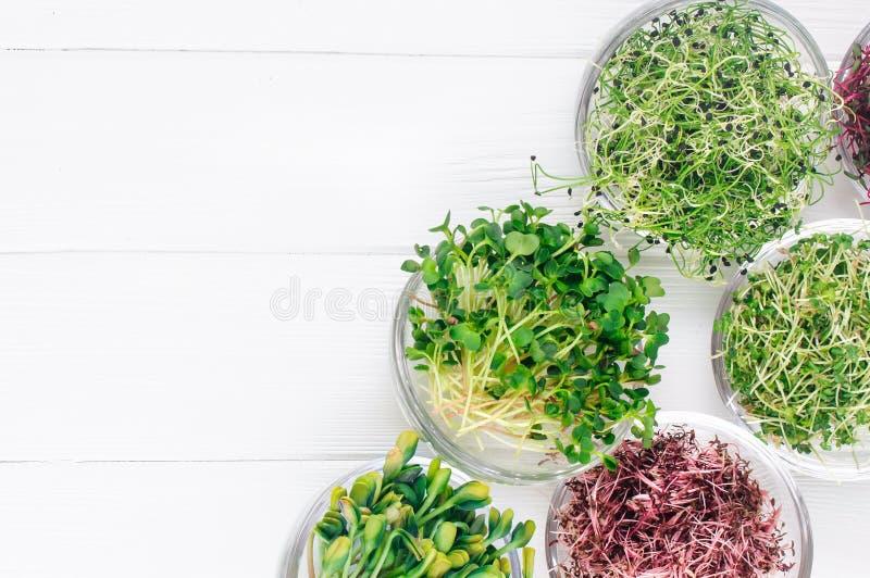 Verdes micro del rábano, del amaranto, de la mostaza, de remolachas y de la cebolla en bol de vidrio fotografía de archivo