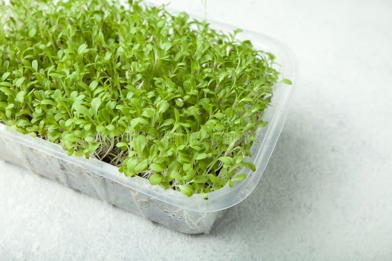 Verdes micro frescos del granjero en un envase en un fondo blanco Un producto para librarse de toxinas y de una dieta sana imágenes de archivo libres de regalías