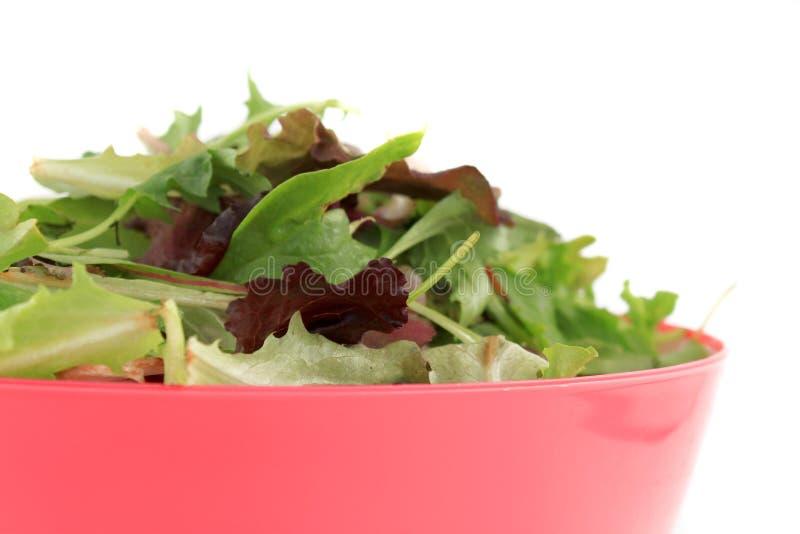 Verdes misturados para a salada imagens de stock royalty free