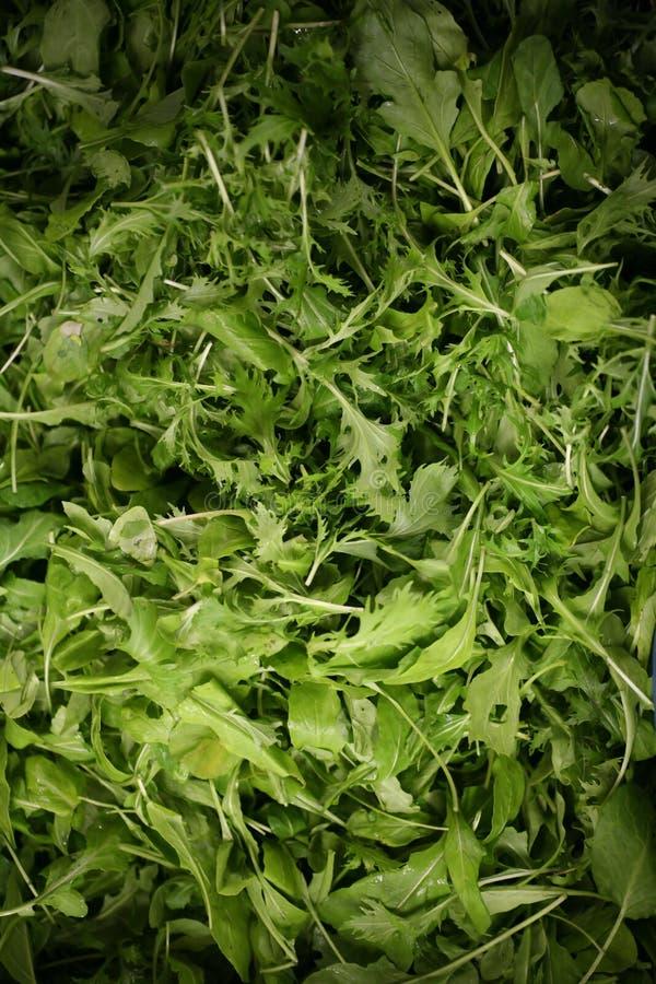 Verdi dell'insalata immagini stock