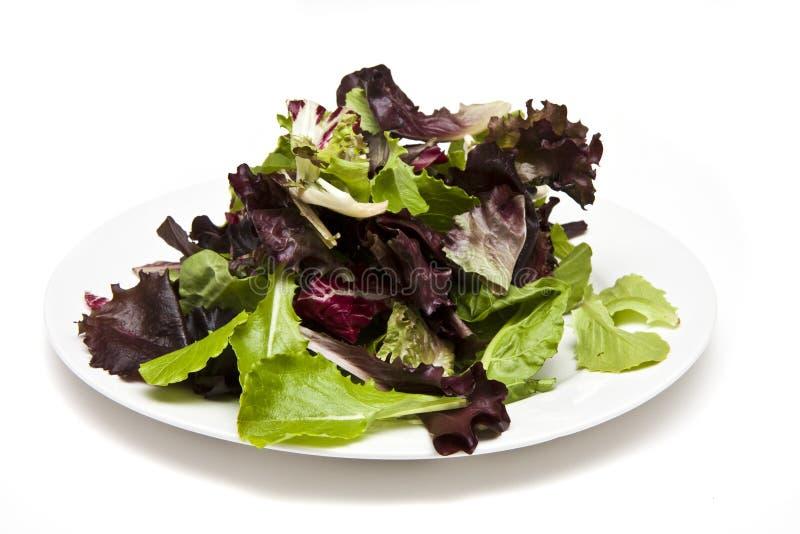 Verdi dell'insalata sulla zolla bianca fotografie stock libere da diritti