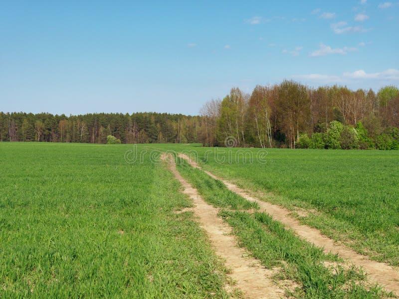 Verdi freschi della primavera giovani nel campo e nella foresta immagine stock