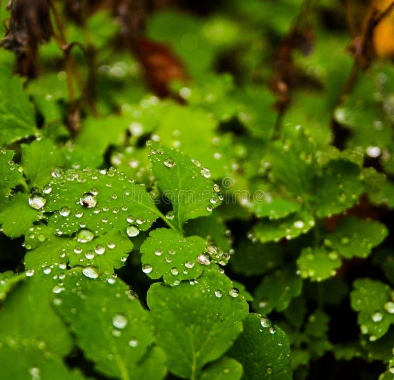 Verdi nella foresta fotografia stock libera da diritti