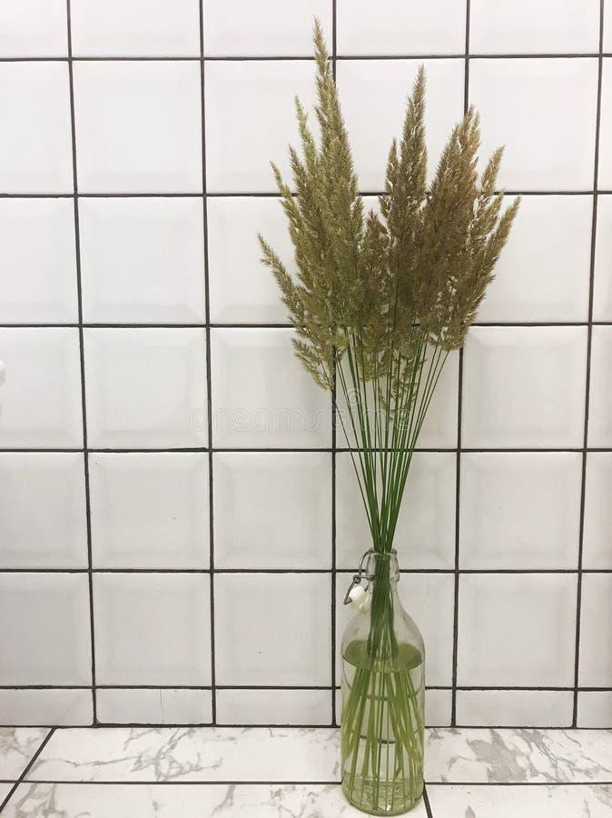 Verdi nella toilette fotografie stock libere da diritti