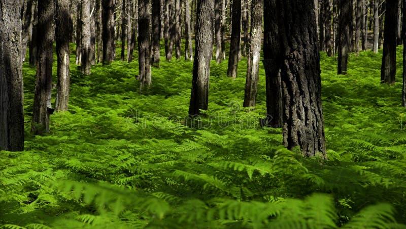 Verdissez la forêt photo stock
