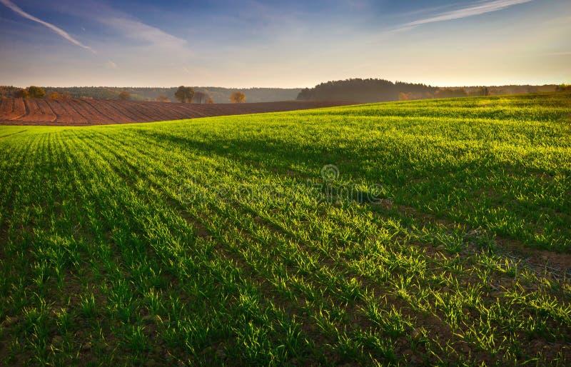 Verdissez le champ dans la lumière de matin photo stock