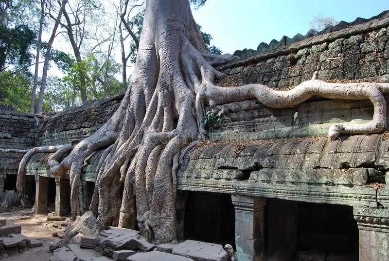 Verdoppelung von Wurzeln. Tempel Ta Prohm lizenzfreies stockfoto