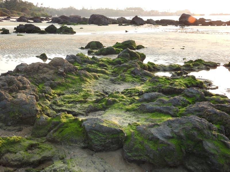 Verdor en rocas, playa de Redi fotografía de archivo