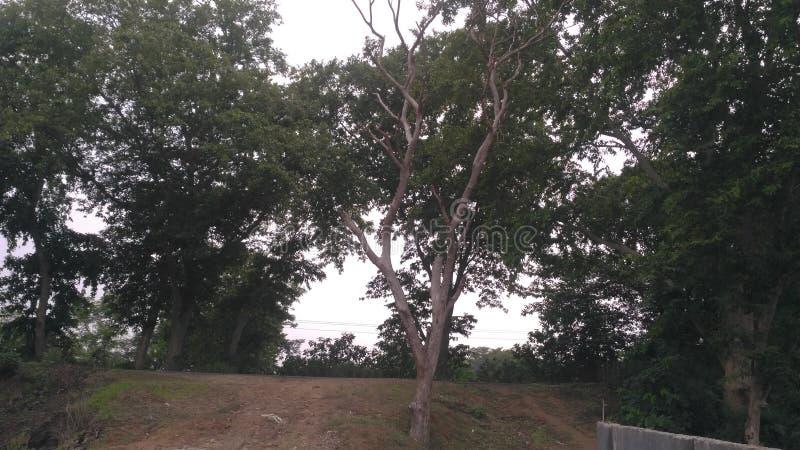 Verdor, naturaleza, paisaje, plantas y árboles, troncos, hojas imagen de archivo libre de regalías