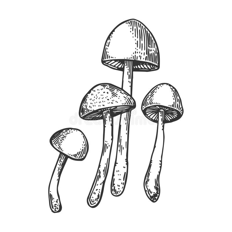 Verdovende paddestoel die vectorillustratie graveren stock illustratie