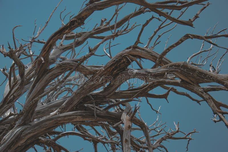 verdraaide einden van droge boom stock foto's