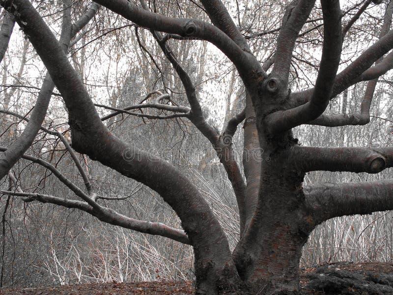 verdrehter Baum lizenzfreie stockfotos