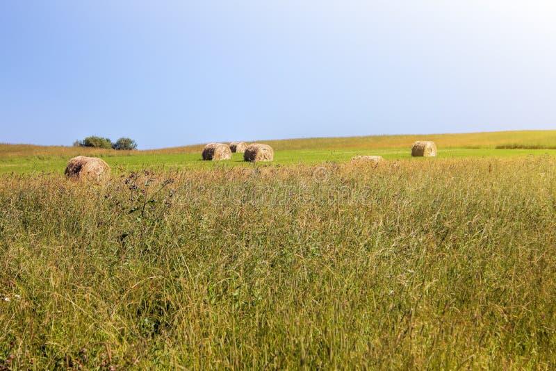 Verdrehter gelber Heuschober auf Landwirtschaftsweidelandschaft, Hintergrund lizenzfreie stockfotos