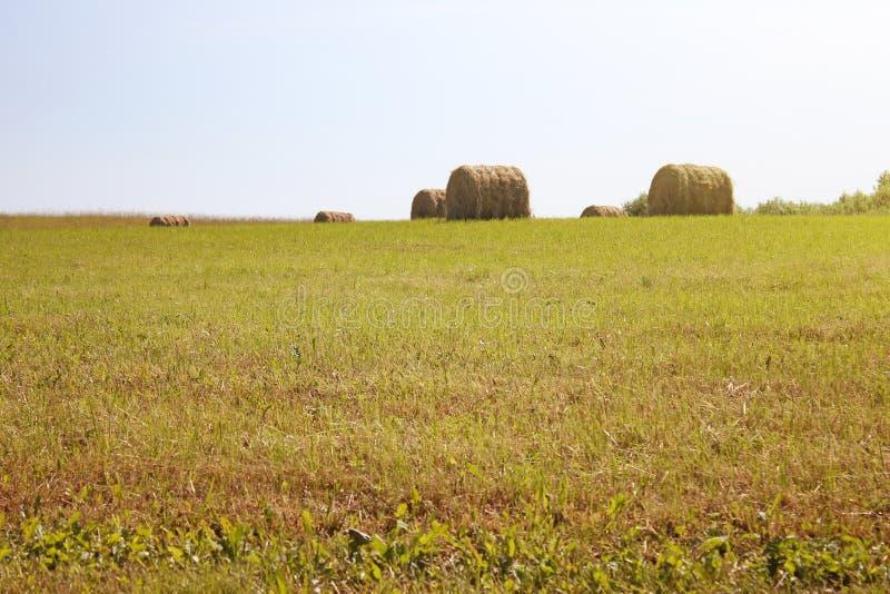 Verdrehter gelber Heuschober auf Landwirtschaftsweidelandschaft, Hintergrund lizenzfreie stockfotografie