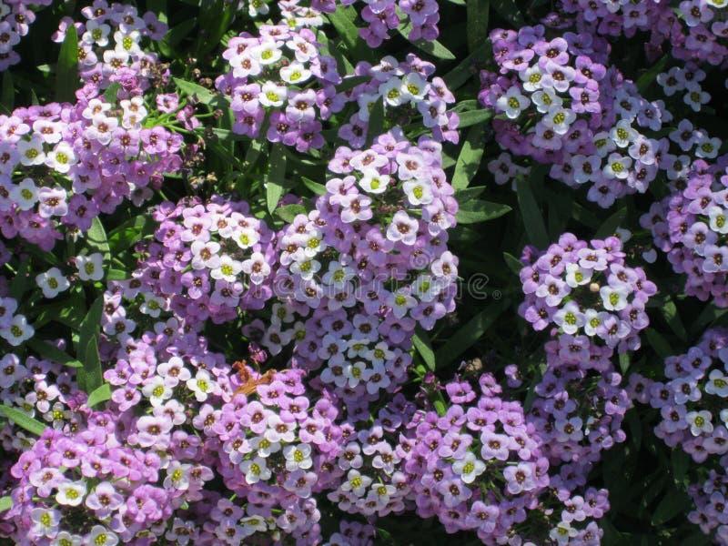 verdura de la flor fotografía de archivo