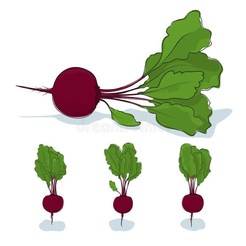 Verdura de raíz de la remolacha en un fondo blanco libre illustration
