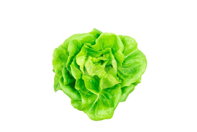 Verdura della lattuga di Butterhead isolata fotografia stock libera da diritti