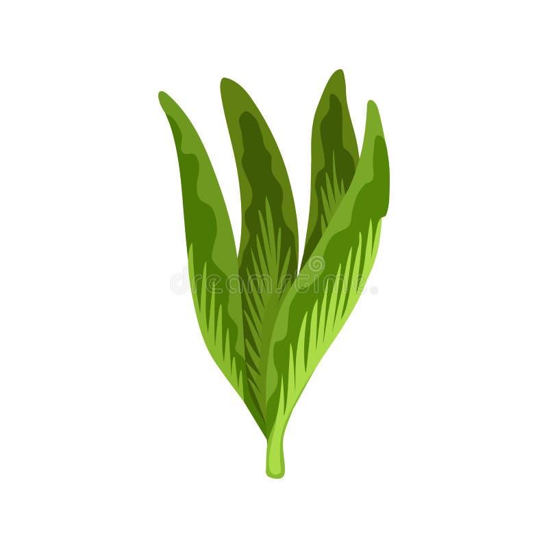 Verdura di insalata ed erba fresche verdi, alimento vegetariano organico, illustrazione di vettore isolata su fondo bianco royalty illustrazione gratis