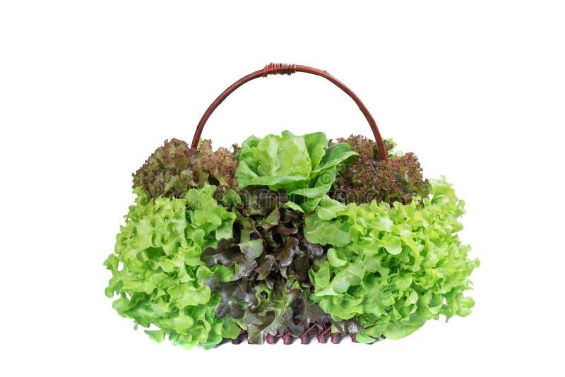 Verdura di insalata fresca nel baske fotografia stock libera da diritti