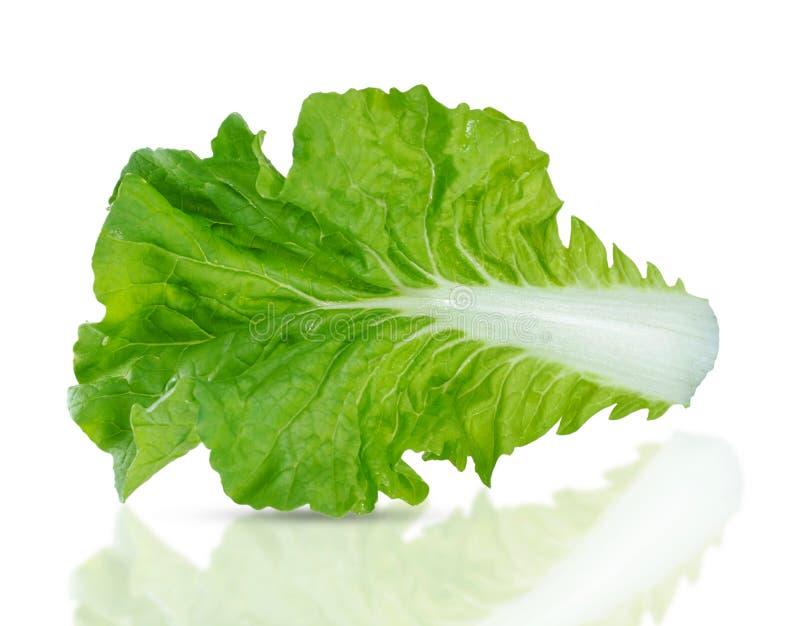 Verdura di insalata isolata su fondo bianco fotografie stock
