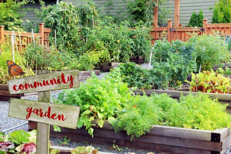 Verdura e Herb Garden immagine stock libera da diritti