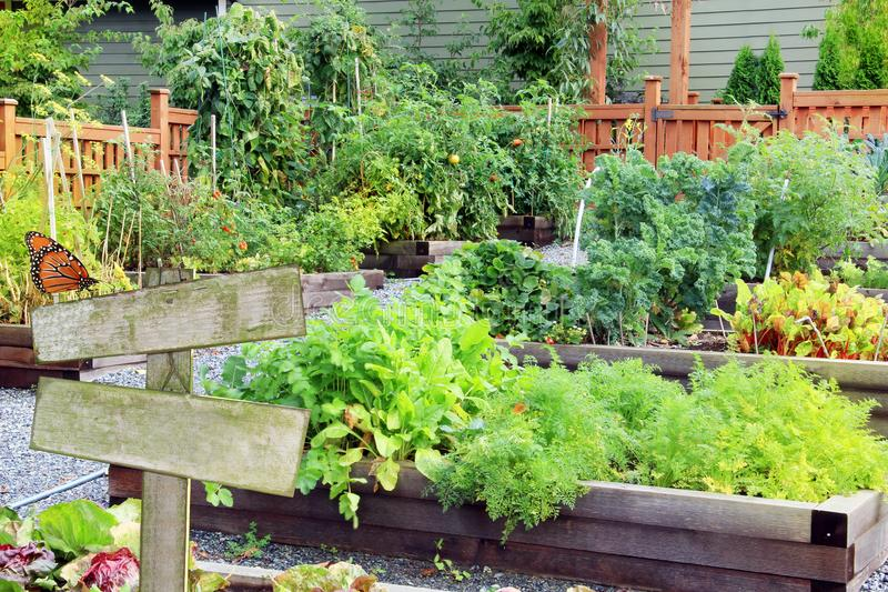 Verdura e Herb Garden immagini stock libere da diritti