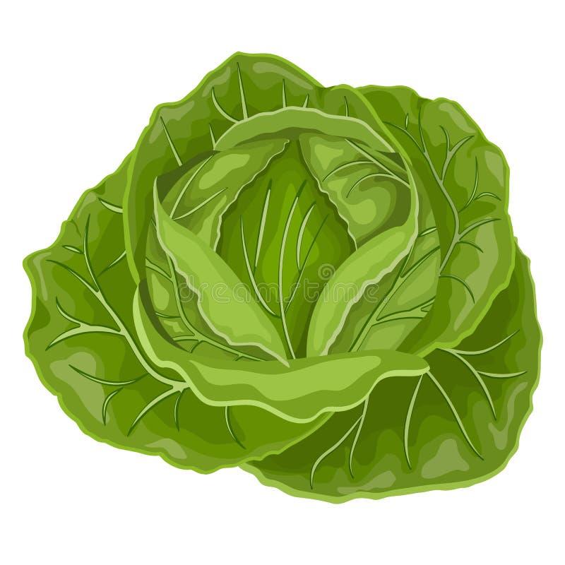 Verdura fresca de la col verde col para el mercado de la granja, diseño vegetariano de la receta de la ensalada Ejemplo del vecto libre illustration