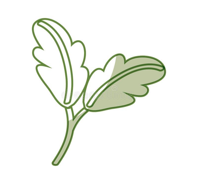Verdura fresca della lattuga illustrazione vettoriale