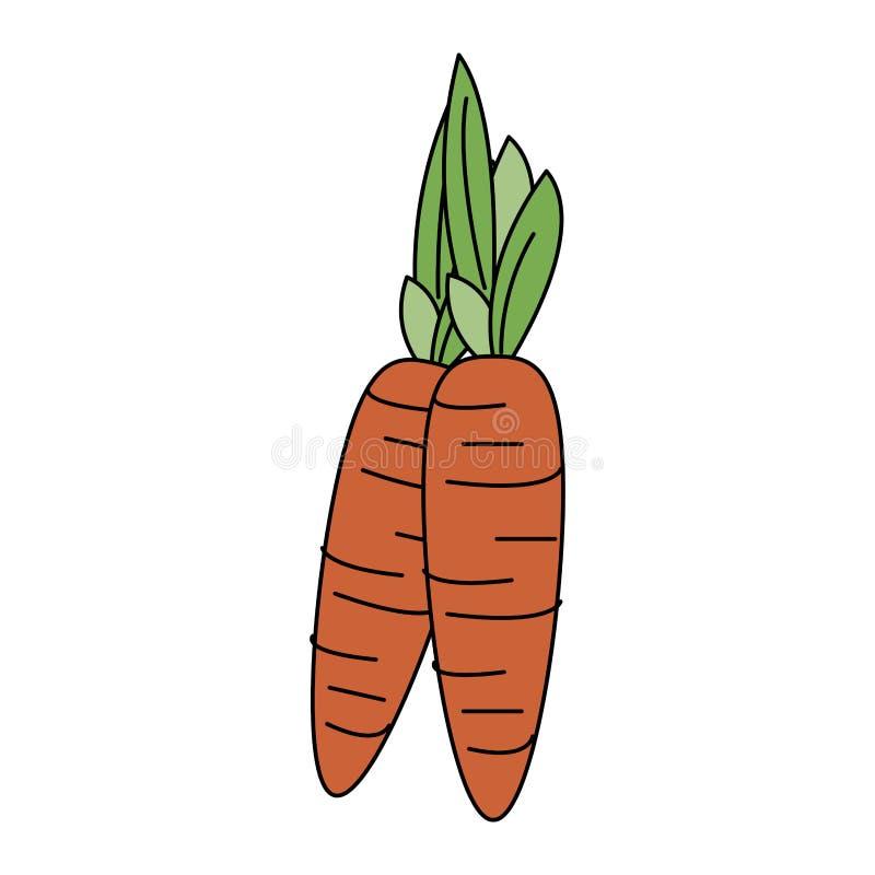 Verdura fresca delle carote illustrazione vettoriale
