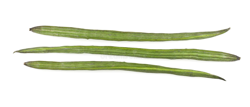 Verdura o Moringa della bacchetta immagini stock libere da diritti