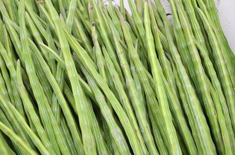 Verdura o Moringa della bacchetta immagine stock