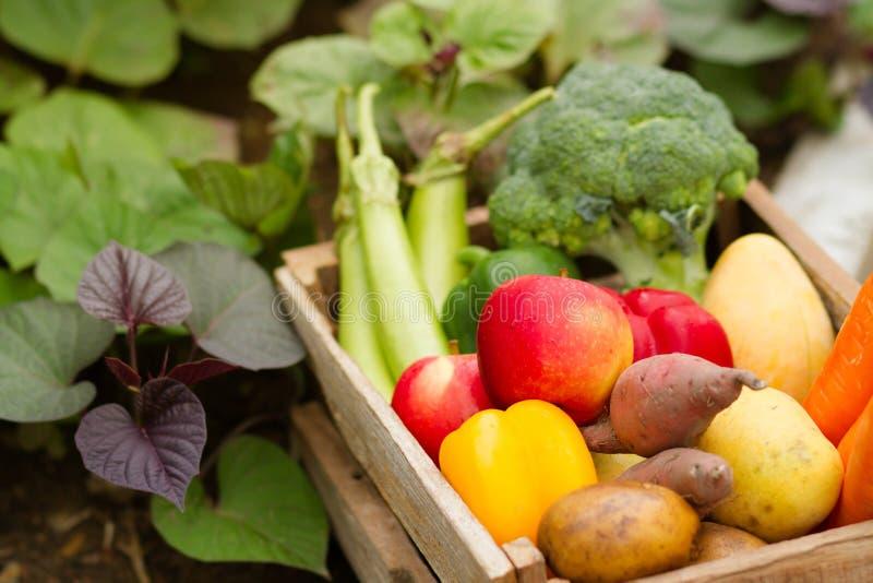 Verdura orgánica fresca en crateApple de madera y una cierta cosecha vegetal el otoño fotografía de archivo