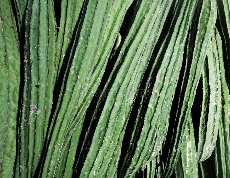 Verdura verde del qua del pecado foto de archivo