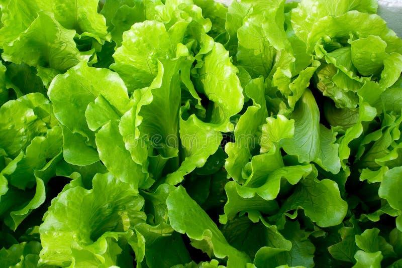 Verdura verde fresca fotografia stock