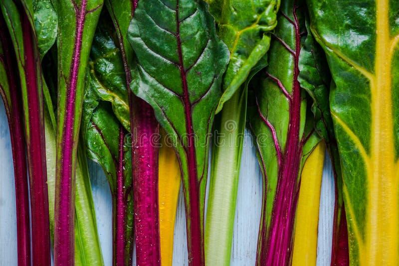 Verdura vibrante, cardo suizo del arco iris foto de archivo libre de regalías