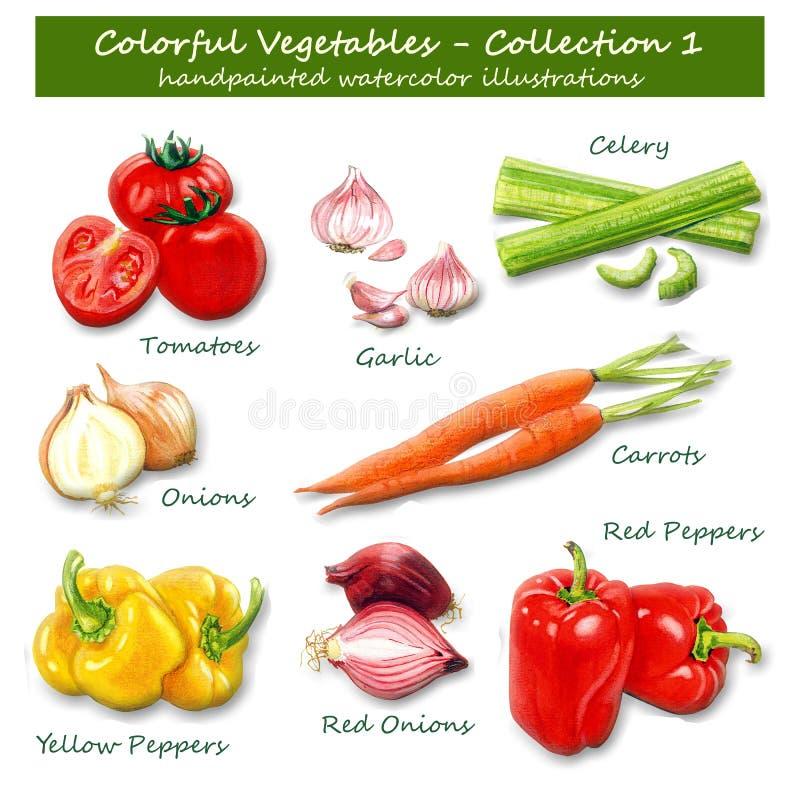 Verduras coloridas - colección 1 - ejemplos pintados a mano de la acuarela fotos de archivo