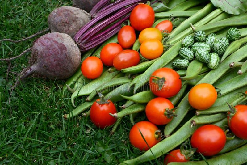 Verduras cosechadas de la asignación imagenes de archivo
