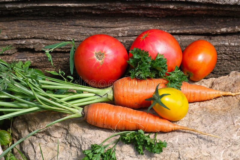 Verduras crecidas jardín orgánico fresco foto de archivo libre de regalías