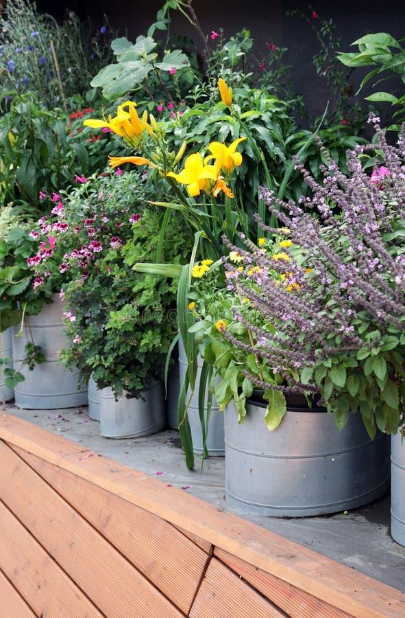 Verduras crecientes tales como plantas de la tina fotos de archivo libres de regalías
