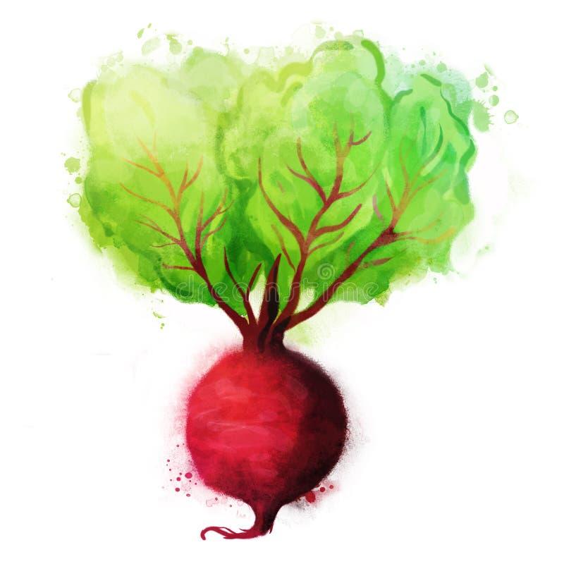 Verduras de la acuarela fijadas: Remolachas stock de ilustración