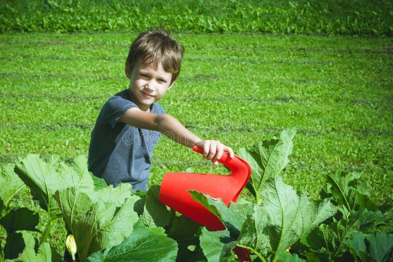 Verduras de riego del niño en el jardín fotos de archivo