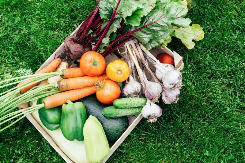 verduras del jardín orgánico en un fondo verde foto de archivo