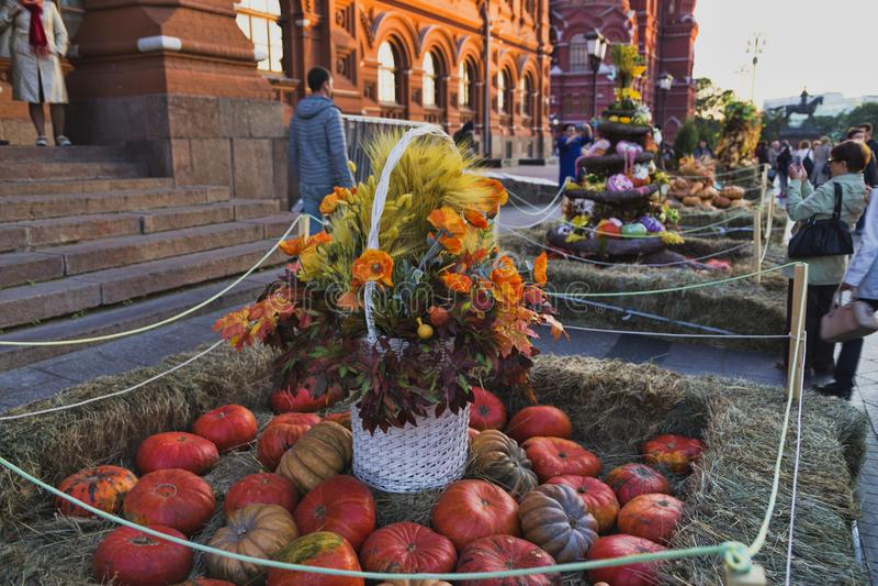 verduras del otoño de la estación de la calabaza de las verduras del otoño imágenes de archivo libres de regalías