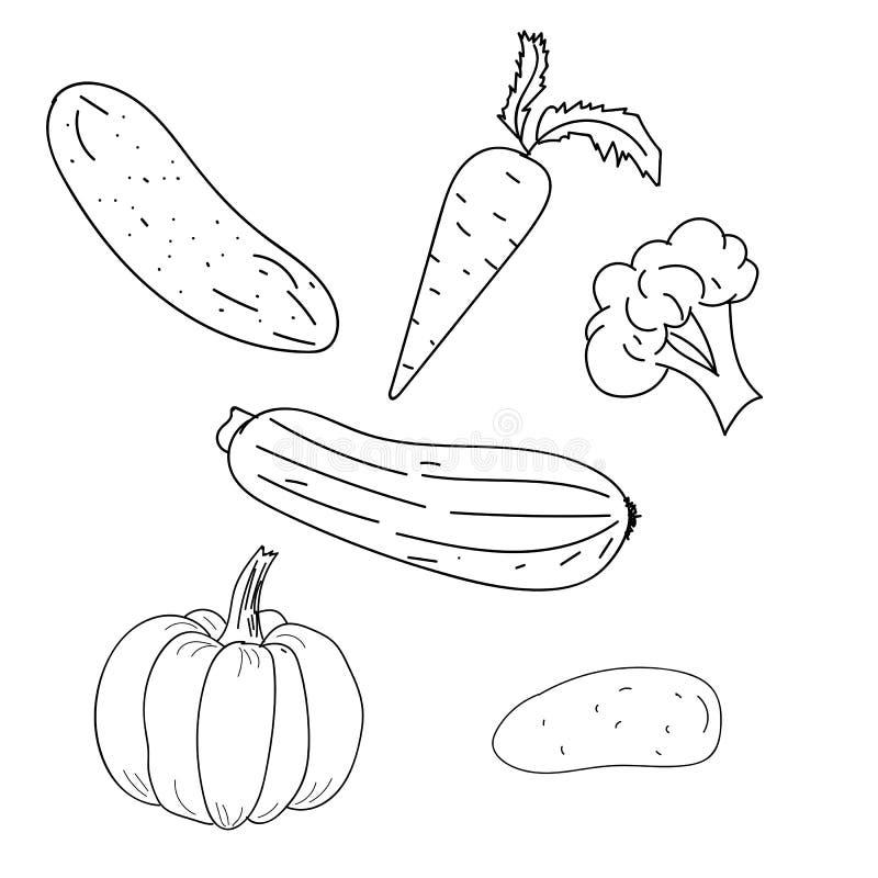 Verduras Ejemplo del esquema del vector Gráfico de la mano ilustración del vector
