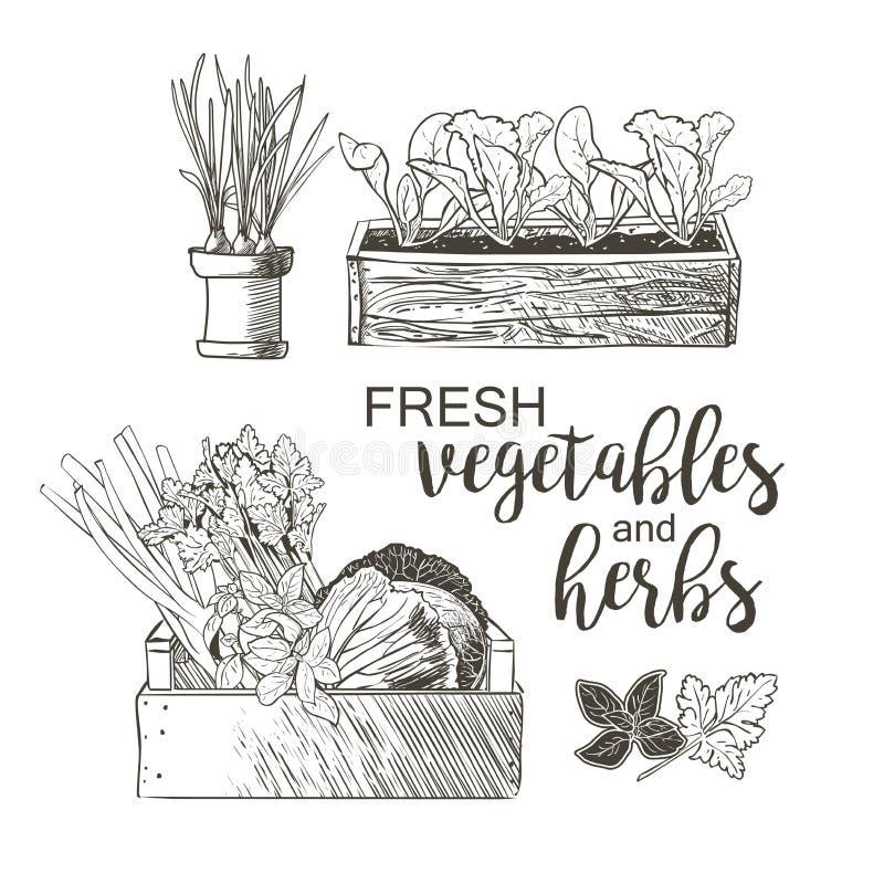 Verduras en macetas stock de ilustración