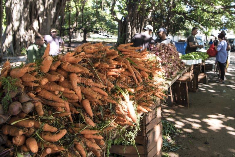 Verduras en mercado callejero debajo del baniano enorme - benghalensis de los ficus, Cuba imagen de archivo libre de regalías